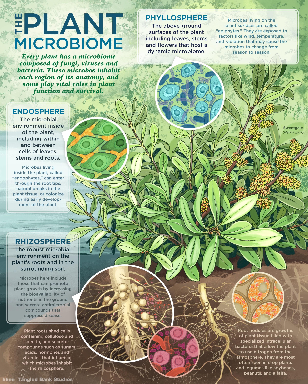 Visualizing The Plant Microbiome - I Contain Multitudes - Medium